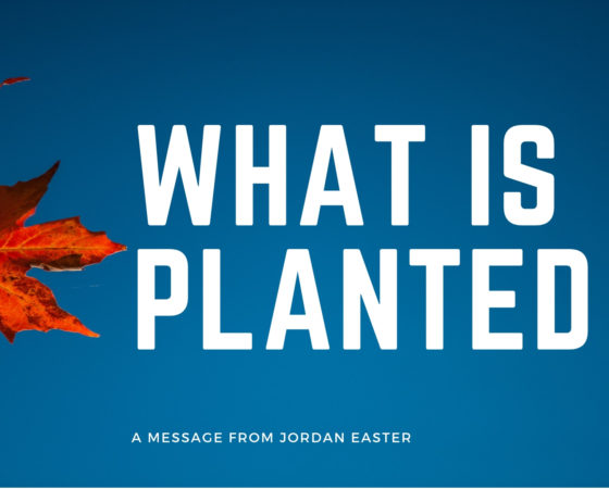 What Is Planted